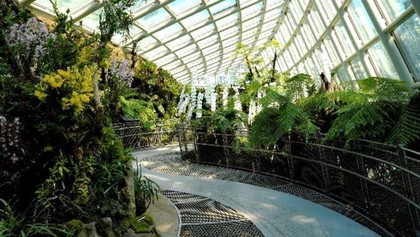 More than 1,000 orchid species, hybrids featured in larger display area at National Orchid Garden