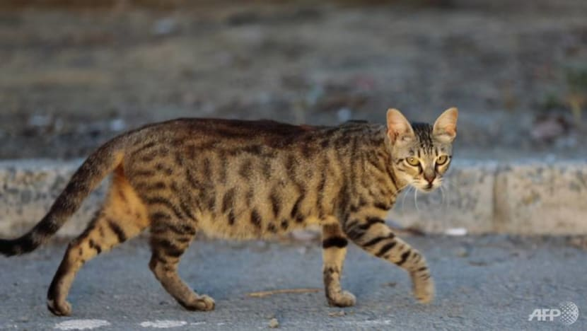 Briton dies from rabies after cat bite in Morocco
