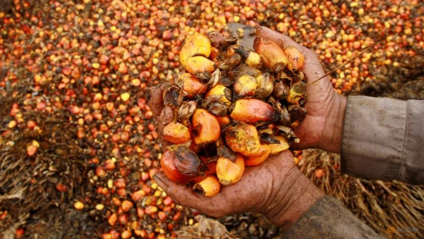 Malaysia keeps Oct crude palm oil export tax at 8per cent