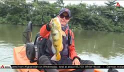 Freshwater kayak fishing being trialled at Punggol Reservoir   Video
