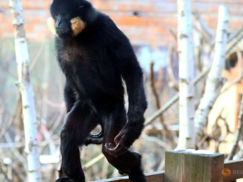 Locked down and lonely, London Zoo faces fight to survive