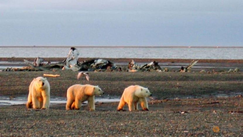 Trump administration finalises oil drilling plan in Alaska wildlife refuge