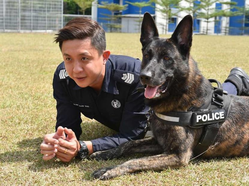 Man's best friend - and colleague: The service dogs of the Police K-9 Unit