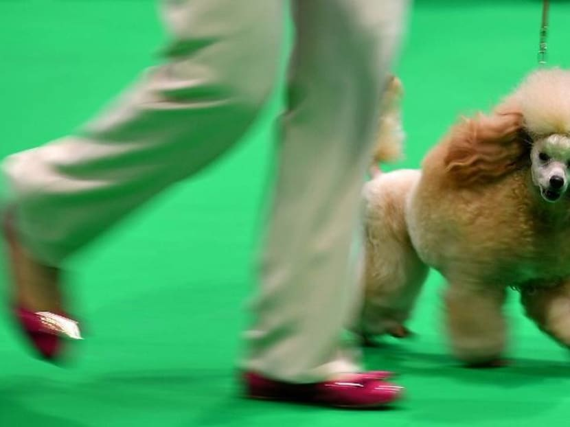 Crufts 2020: The world's biggest dog show opens amid coronavirus fears