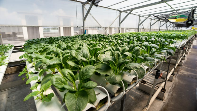 New accreditation scheme being developed to ensure local farms produce pesticide-free vegetables