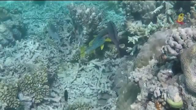 联合国教科文组织不把澳洲大堡礁列入濒危世界遗产名单
