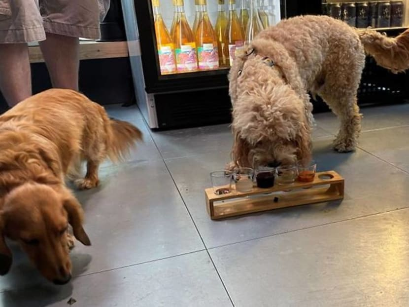A Bloodhound Mary please bartender, and one for my dog