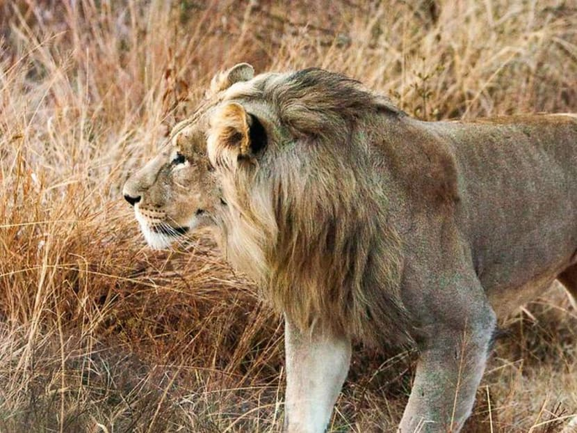 Chasing lions, leopards and elephants in South Africa – for less than you'd think