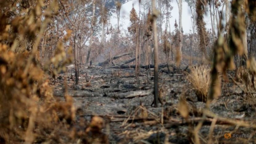 Indigenous people sue retailer Casino over Amazon destruction