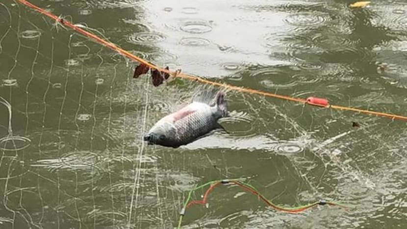 IN FOCUS: As fishing rises in popularity, concerns grow about overfishing and litter