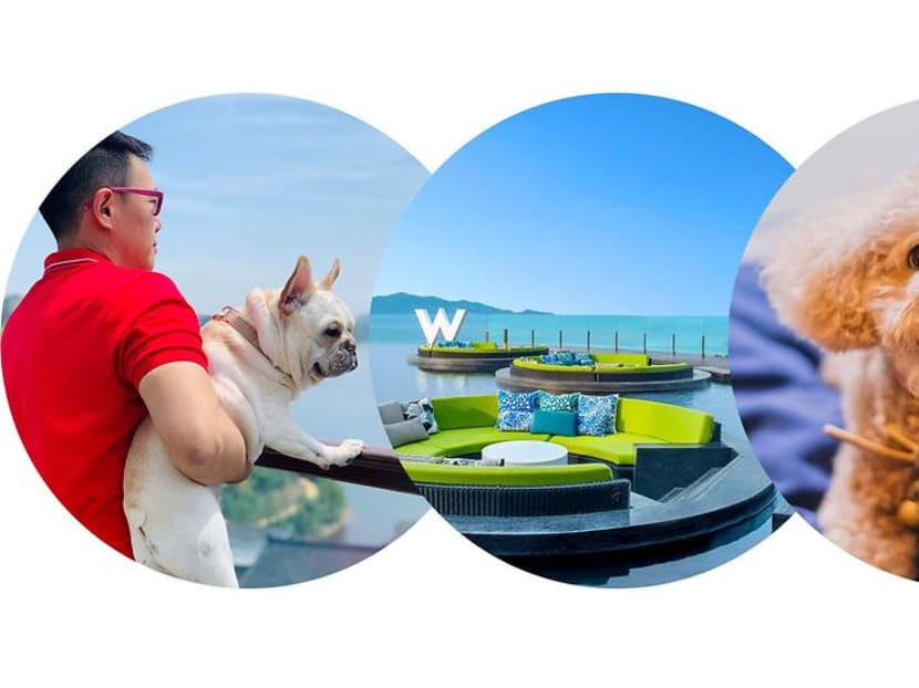 The best pet-friendly hotels in Asia – puppy room service included