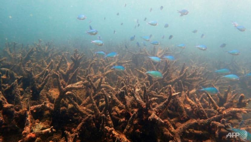Heatwaves killing coral reefs far faster than previously believed: Study