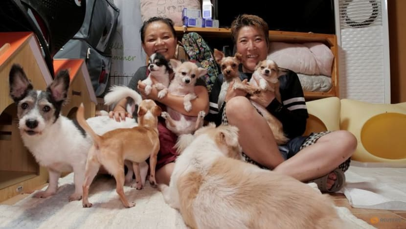 South Korea to grant legal status to animals to tackle abuse, abandonment