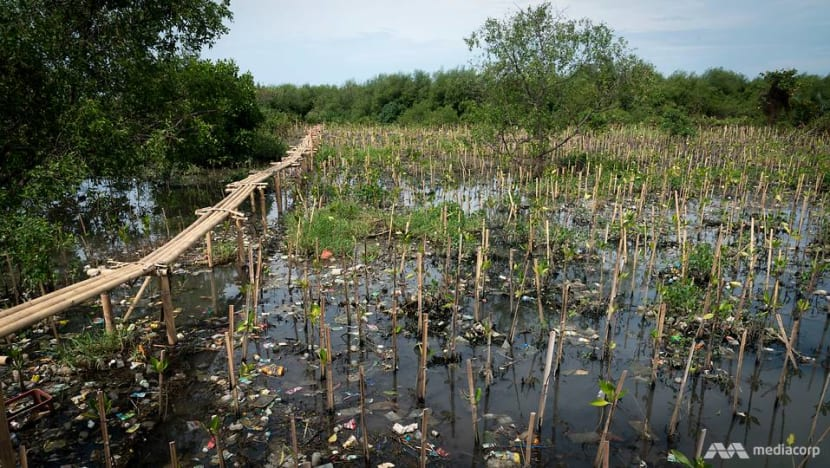 Last mangrove ecosystem in Jakarta city under threat from land subsidence and climate change