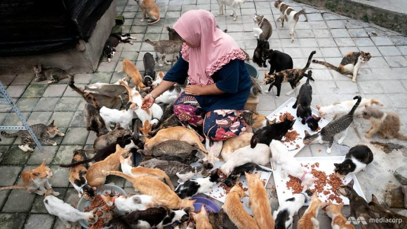 Indonesian woman converts home into shelter for more than 300 stray and abandoned cats