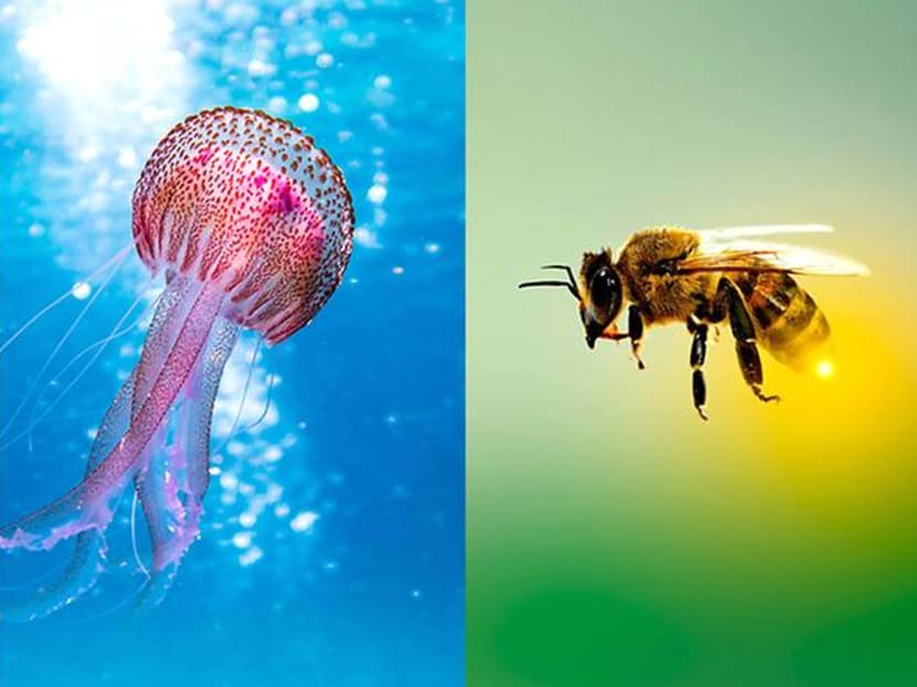 First aid tips: What should you do after being stung by a stingray, jellyfish or bee?