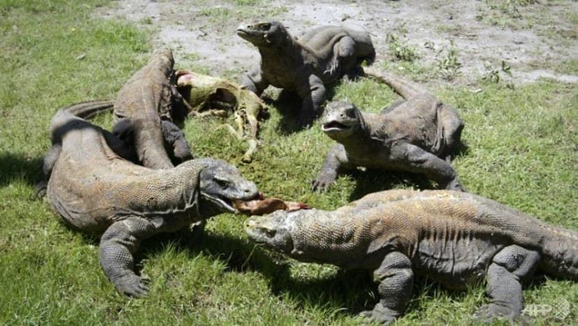 Indonesia says scrapping plans to close Komodo island