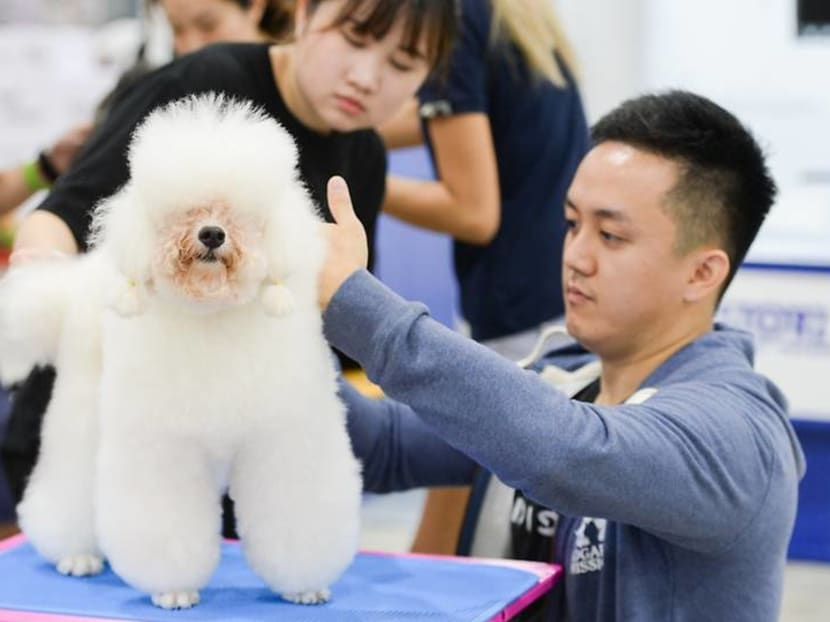 Adoption drive, dog massages and a fish beauty contest at PetExpo this weekend