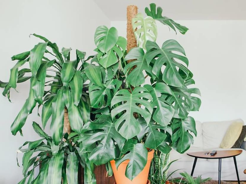 Green living: 10 indoor plants that will flourish despite small spaces and low light
