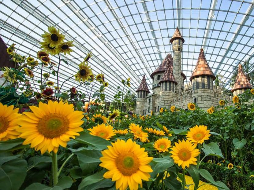 More than 10,000 sunflowers on display at Gardens by the Bay until Oct 21