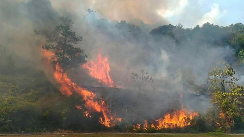 Forest fire in Johor spreads to 98 hectares