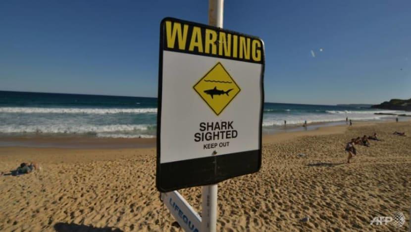 Australian surfer survives great white shark attack