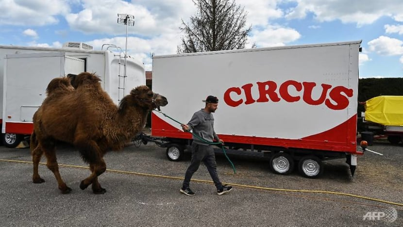 France to ban mink farms and wild animals in travelling circuses