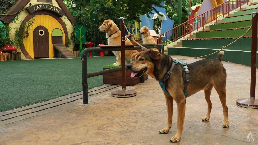 Zoo trainers come to the rescue of 'misunderstood' SPCA rescue dogs