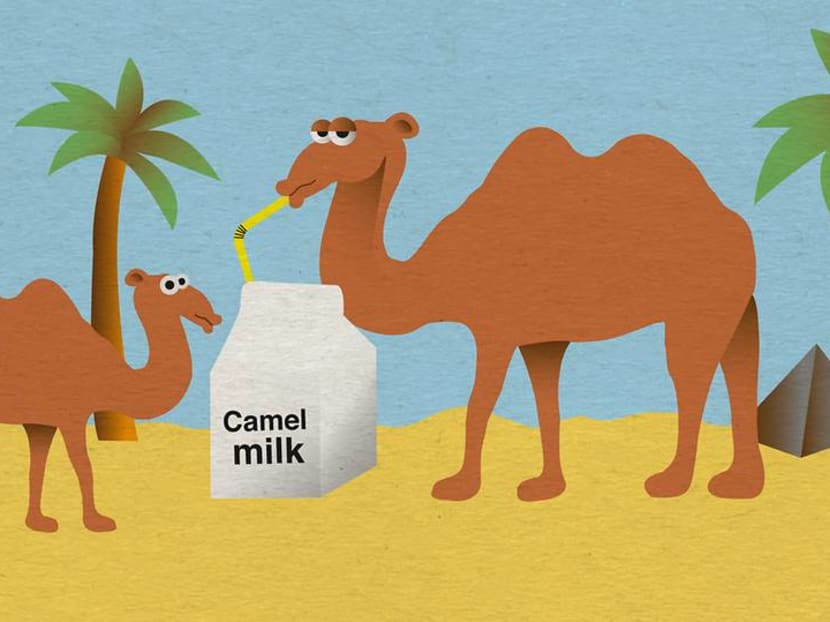 Camel milk could be the future of dairy. Are you ready for a camelcino?