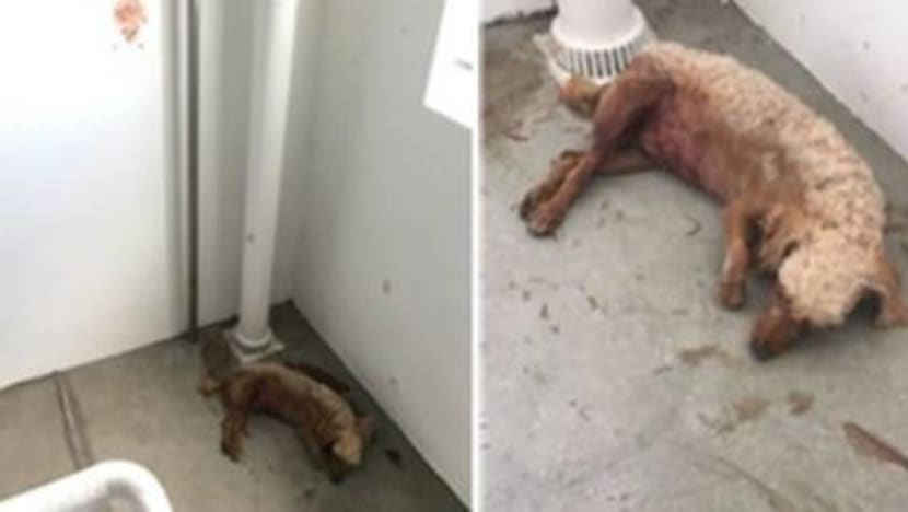 Dogs dragged to their death, starved and abused: The rising number of animal cruelty reports