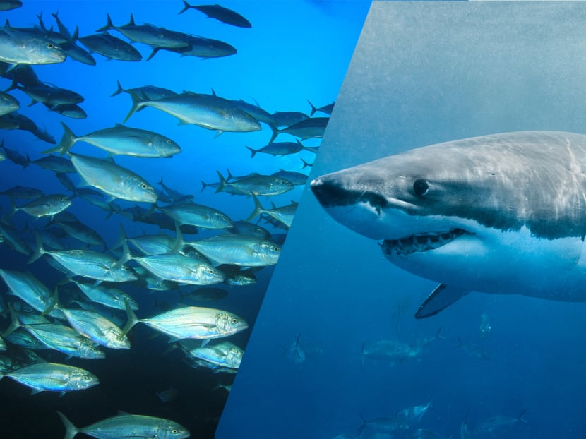 Sharks and tuna might be extinct by the time your kids grow up – but there is hope