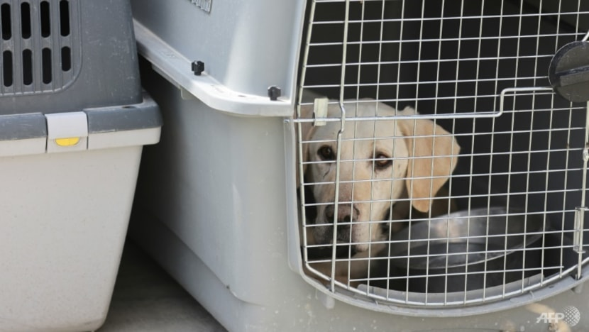 Dogs of war: Afghan mutts find new home after missing US evacuation