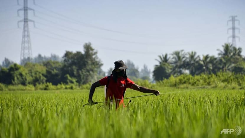 Commentary: Why Indonesian farmers may become extinct in about 40 years