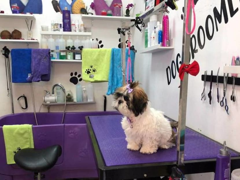 COVID-19 forced this hairdresser to switch her customers from humans to dogs
