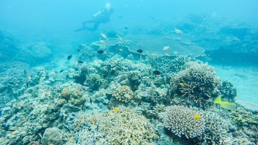 From poacher to protector: Local communities embrace conservation of crucial marine treasure