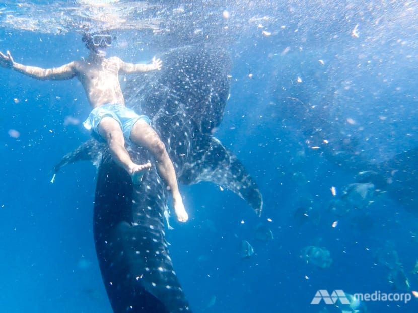 Whale shark selfies in the Philippines' seaside 'theme park': A tourist experience that's out of control?