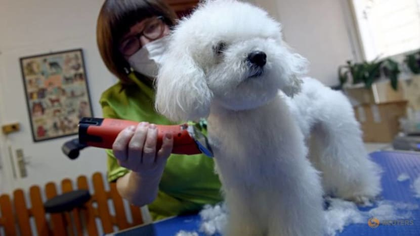 In Vienna, getting a haircut can be easier for dogs than their owners