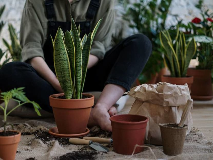Learning the botanical names of plants can make you a better gardener