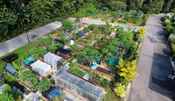 Commentary: Singaporeans are proving you can grow your vegetables and eat them too