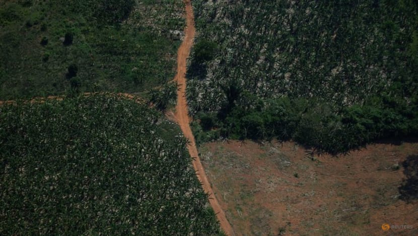 No end in sight for deforestation, as national goals and funding fall short