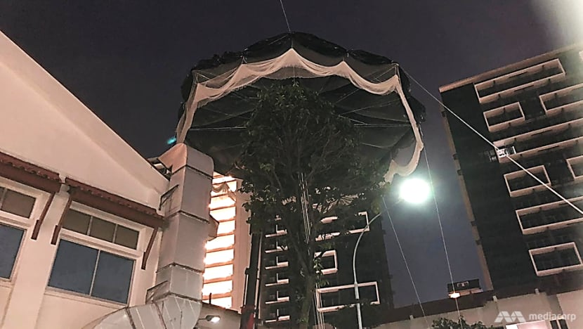 Giant trap to control mynah population trialled in Potong Pasir
