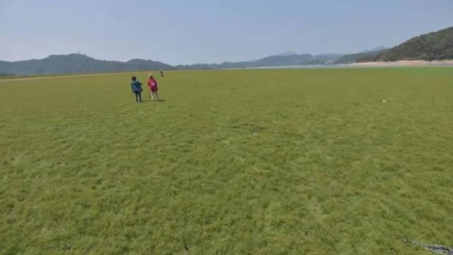 台湾旱灾持续 日月潭变身大草原