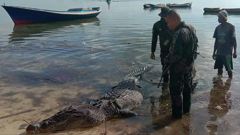 Huge saltwater crocodile kills fisherman in latest attack on Philippine island