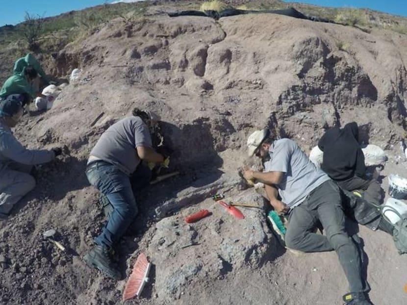 Fossils of oldest member of huge dinosaur group found in Argentina