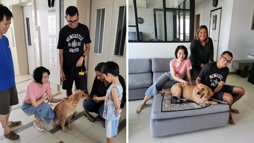 Bigger local mixed-breed dogs can be rehomed in HDB flats under revised criteria