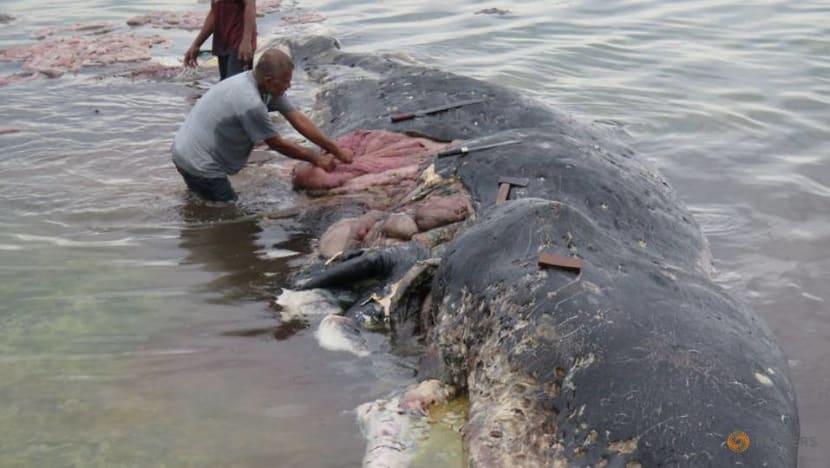 Plastic found in deepest ocean animals
