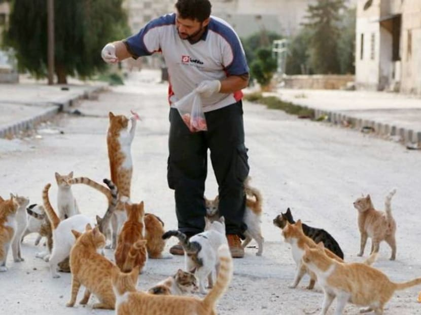 The feeding of the one thousand: Idlib sanctuary offers cats a refuge from war