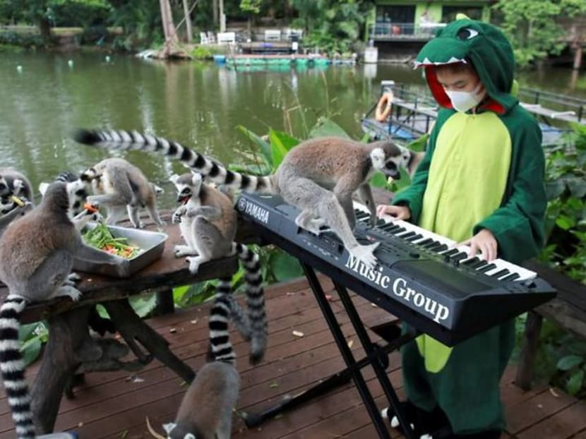 A lemur on my keyboard - Thai girl plays for animals in deserted zoo