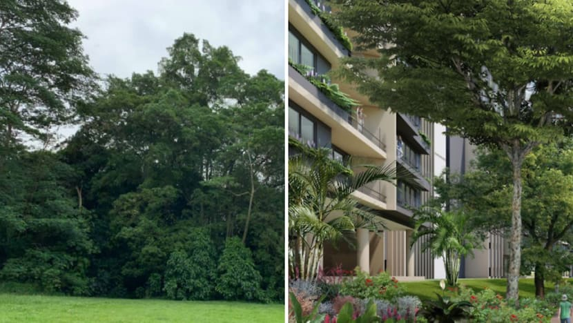 Commentary: Saving Dover Forest and the plight of the Singapore urban planner