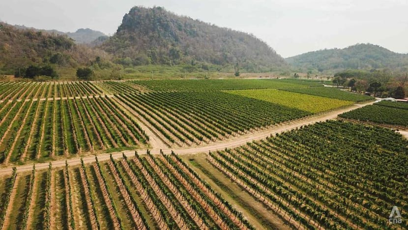 Adapting to climate change: How Thailand's tropical wines are teaching the old world new tricks